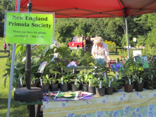 I was representing the New England Primula Society again
